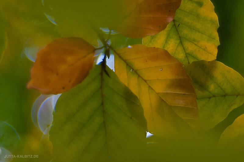 Herbst-17.jpg