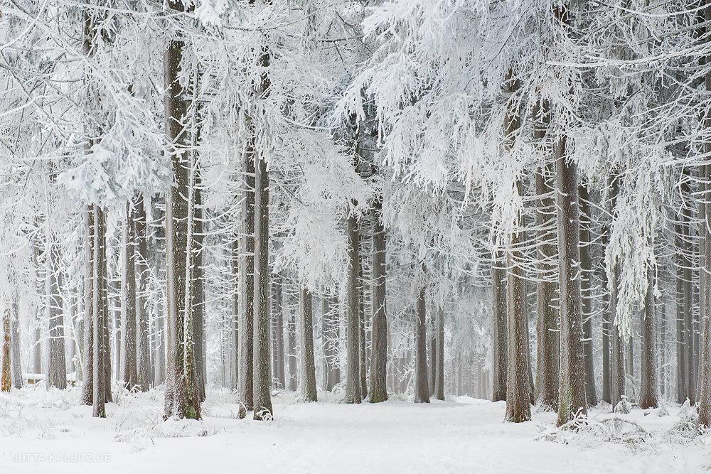 Winter am Achtermann - Hochharz