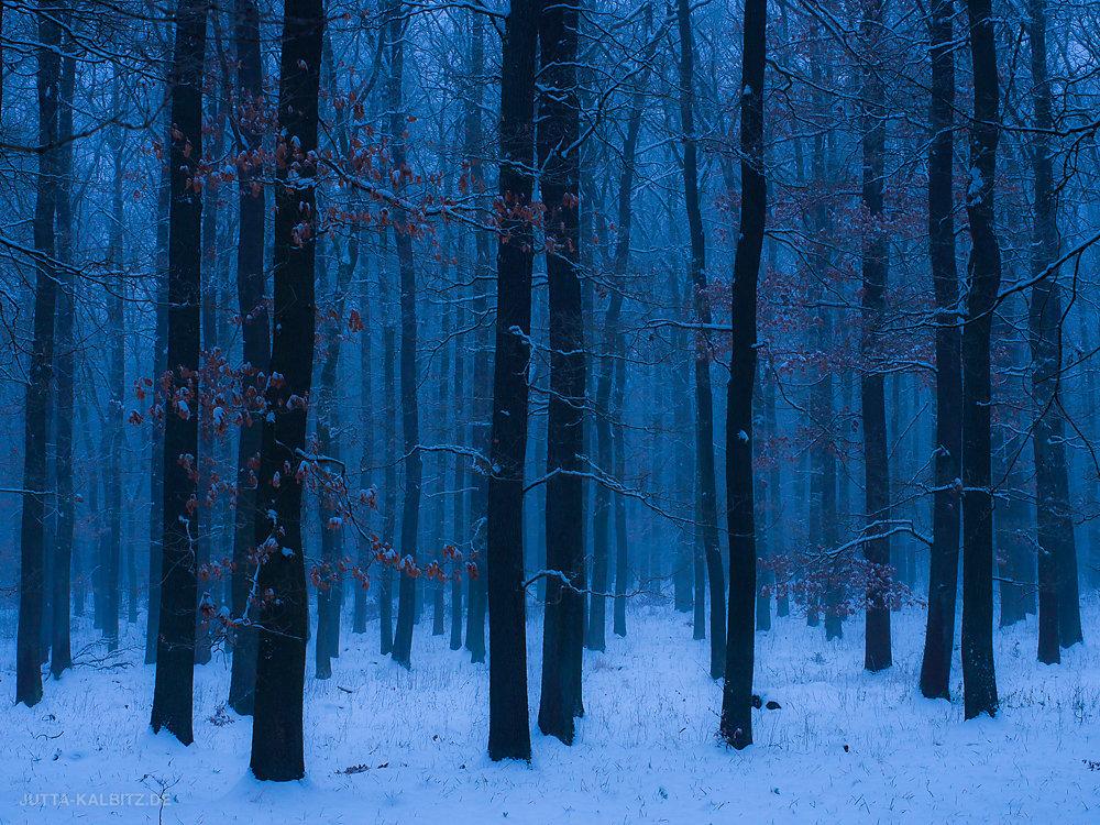 Blaue Stunde im Harz