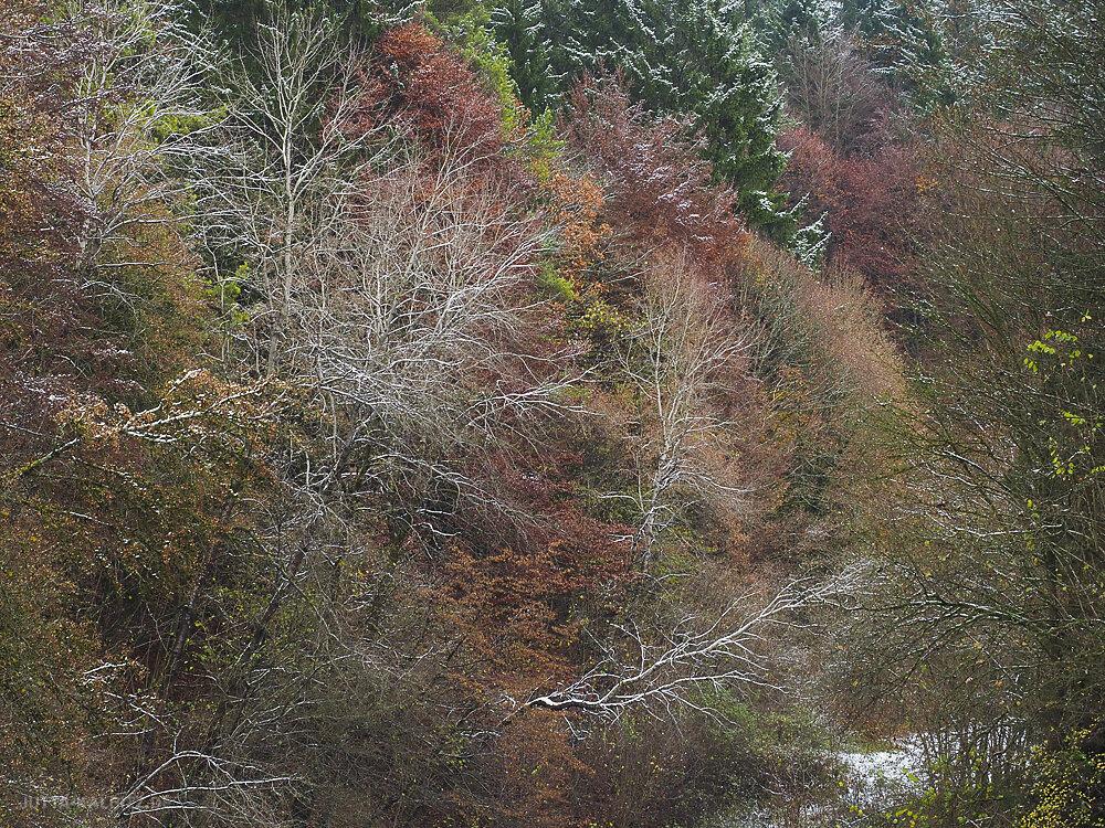 winterbaum-1.JPG