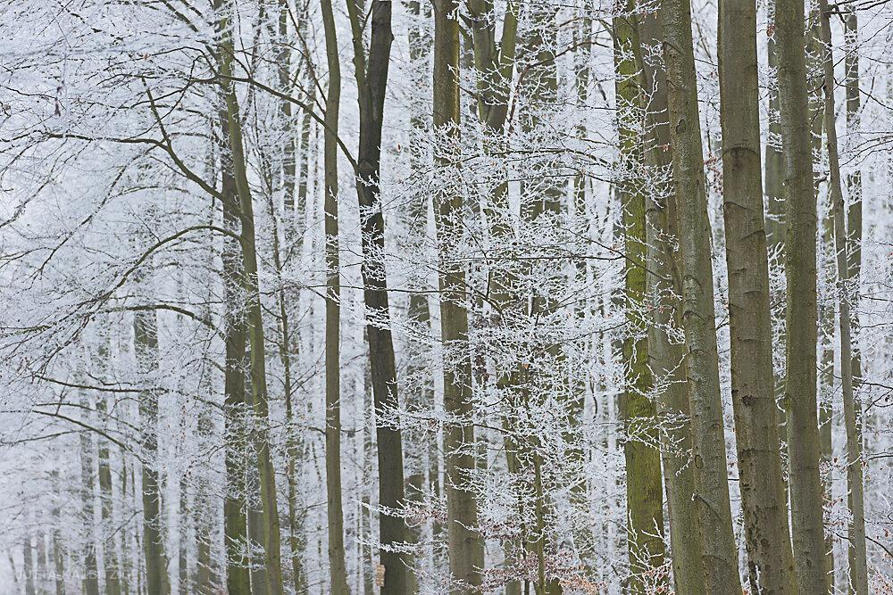 winterbaum-9.JPG