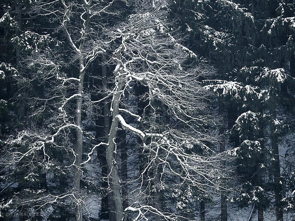 winterbaum-15.JPG