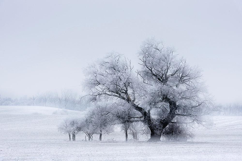 Winterbaum - Saalekreis