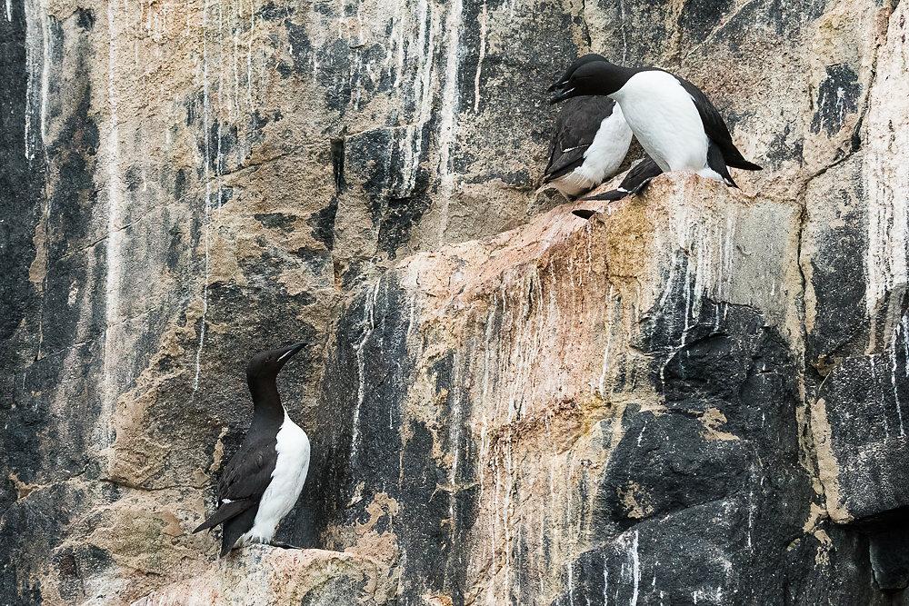 Svalbard-Fauna-2b.jpg