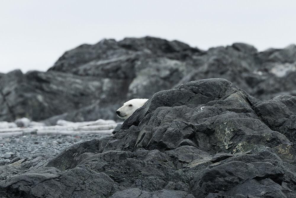 Arktische Fauna